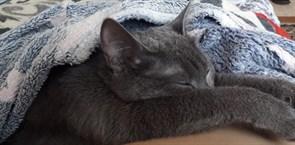Кошка на Станкостроителей