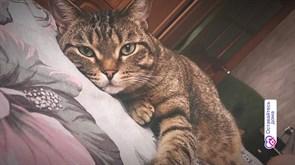Кот Тимоша