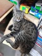 Кот на Самарской