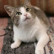 Кошка ЛЯЛЯ