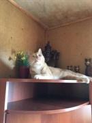 Кот в СНТ Созидатель
