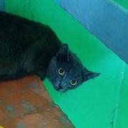 Кот Серый в Ульяновске