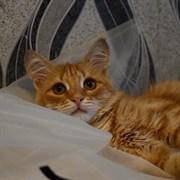 Кошка АГНИЯ
