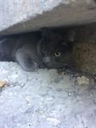 Кот на Дзержинского