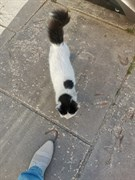 Кошка на Репина