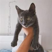 Кошка МИРА