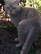 Кошка Рыжая в СНТ Авиастроитель