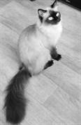 Кошка на пер. Баумана