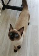 Кошка на Невского