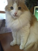 Кот в СНТ Вишневый сад