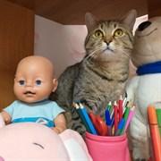 Кот в селе Коровино