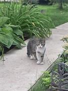 Кошка в СНТ Луговое