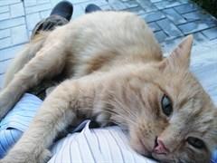 Кот на обкомовских дачах