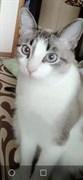 Кот в СНТ Залив