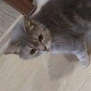 Кошка на Юности