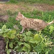 Кошка Кити на Кошевого
