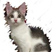 Кошка САНТА