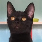 Кошка ОЛЬГА