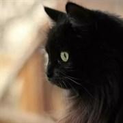 Кошка КЛЕО