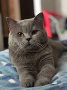 Кот у Леруа Мерлен