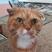 Кот на Туполева 28
