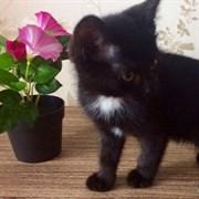 Кошка ИСУЗУ IV
