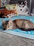 Кошка на Лихачева