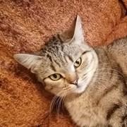 Кошка КРИСТИНА
