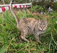 Кошка в СНТ Залив