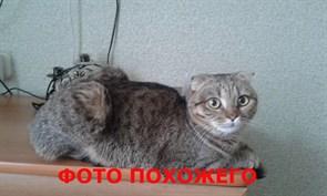 Кот на Шигаева 5