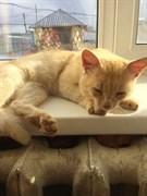 Кот на Мостовая-Сельдь