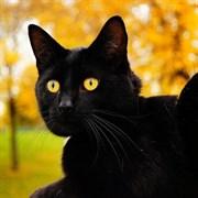 Кошка МАРКИЗА