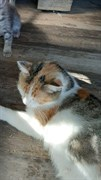 Кошка с Урицкого