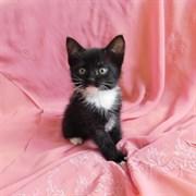 Кошка ЧУНЯ