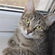 Кошка КАТАРИНА