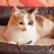 Кошка МИСА