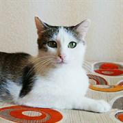 Кошка ВЕСНА
