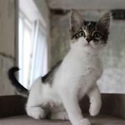 Кошка ТЕЯ