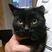 Кошка ШЕЙЛА