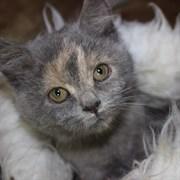 Кошка КУБА