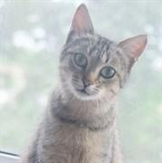 Кошка ЗАЙКА