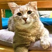 Кот ТЫГЫДЫК