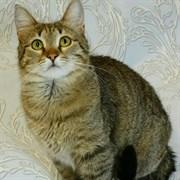 Кошка ДАШКА