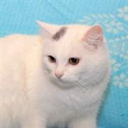 Кошка ЛЮСИНДА