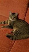 Кошка на Опытном поле