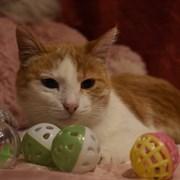 Кошка МАТРЕШКА