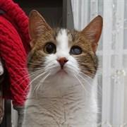 Кошка ДЕВЧУШКА