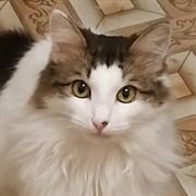Кошка САКУРА
