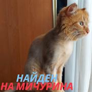 Кот на Мичурина