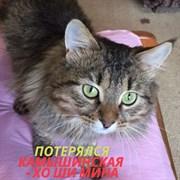 Кот на Хо Ши Мина  - Камышинская